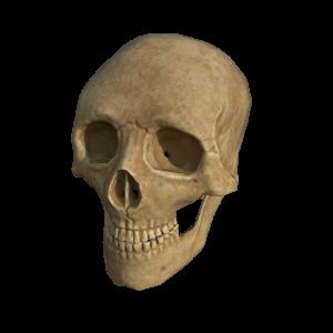 skull_valtteri2